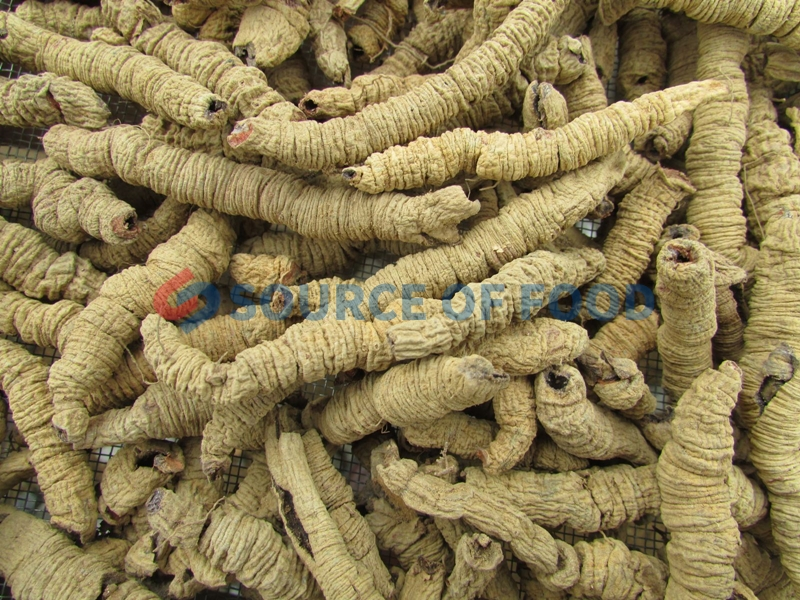 Eucommia dryer and Morinda Officinalis dryer will not loss their madicine value