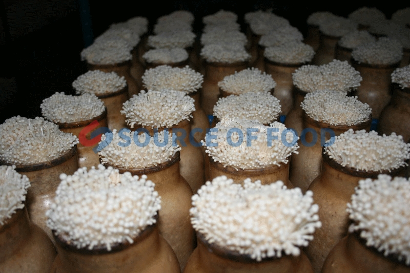 Widely used of mushroom cold storage